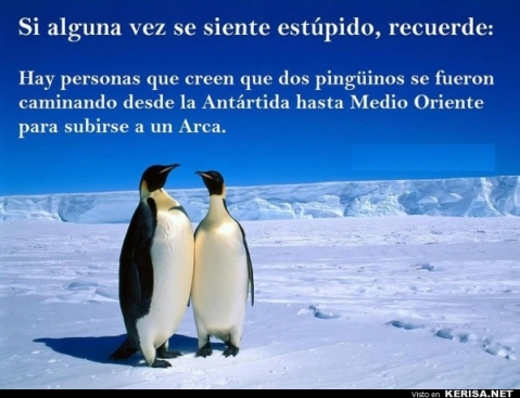 Pingüinos Estúpidos