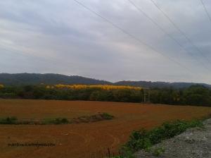 Otra vista del mismo bosque desde una parcela vecina