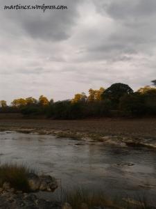 Bosque junto al Río Alamor