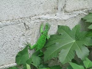 Pacaso en pared de mi casa.